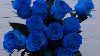 как сделать  синие розы?