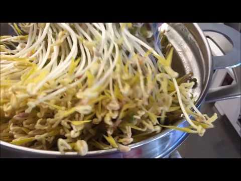 Organic Green Mung Bean Sprout. วิธีเพาะถั่วงอกง่ายๆและปลอดสารพิษ ( Chong's kitchen )