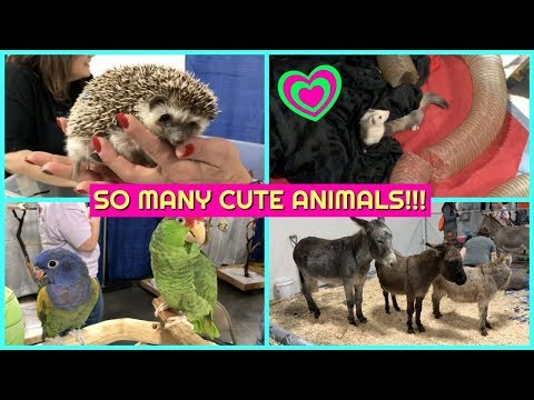 KANSAS CITY PET EXPO 2017! ADORABLE ANIMALS!
