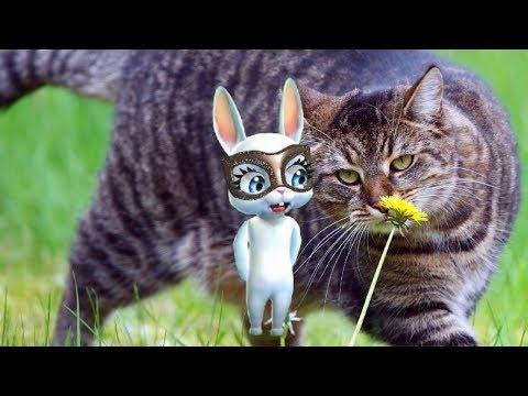 Zoobe Зайка У меня есть котик!!!! - Как поздравить с Днем Рождения
