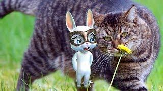 Zoobe Зайка У меня есть котик!!!!