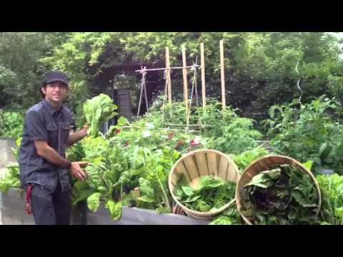 Paul Zammit harvesting the Kitchen Garden