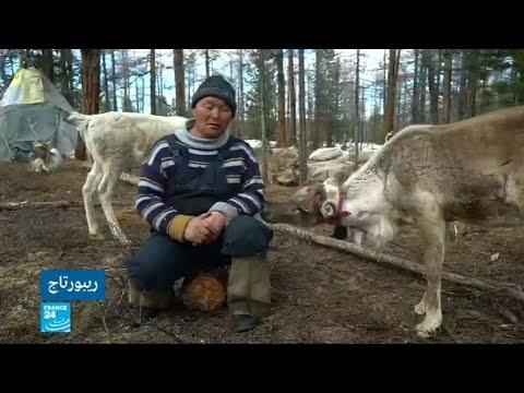 رعاة الرنة على الحدود الروسية المنغولية يعيشون بهدوء بعيدا عن الحداثة  - نشر قبل 1 ساعة