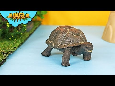 """RIVER ANIMALS In The Jungle! """"Jungle Daddy"""" Tortoise Turtle Schleich Toys Animal Videos"""