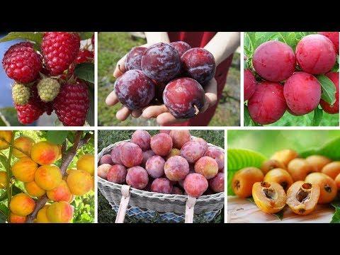 Новинки среди плодовых: саженцы в контейнерах! Сажаем весь июнь.