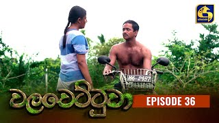 Walawettuwa Episode 36 || ''වලවෙට්ටුවා'' ||  23rd September 2021 Thumbnail
