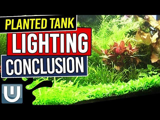 Planted Tank Lighting Conclusions - Planted Aquarium Lighting Guide – Part 8