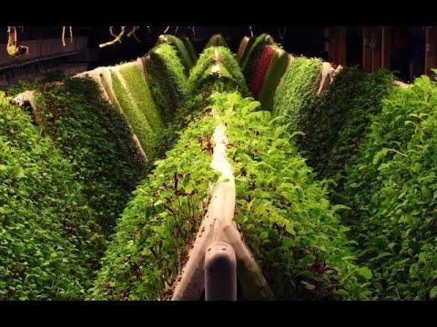 15 BENEFITS OF AEROPONIC GROWING