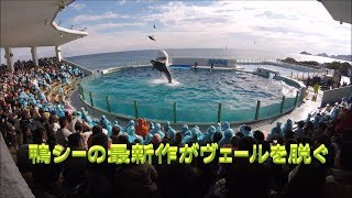 鴨川シーワールド2019 シャチパフォーマンス381 GoProでヴェールを脱いだ鴨シーの新作をセーフティーゾーンから4Kで撮ってみた killer whale show