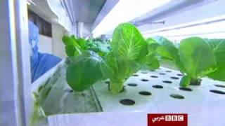 تكنولوجيا زراعية متطورة فى اليابان