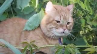 Наш кот Тишка на даче на свободе
