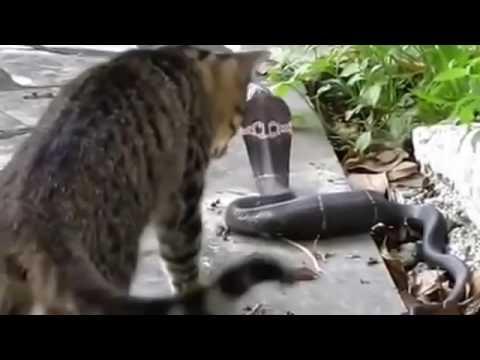 Смешные видео про кошек - YouTube