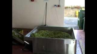 frantoio Sicilia V3 oleificio impianto continuo:  lavorazione olio extra vergine d'oliva Thumbnail