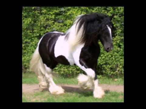 Сравнение живых лошадей и лошадок Schleich