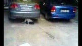 kedilerin seks hayatı
