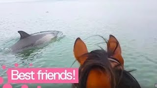 Dolphins and horse swim together