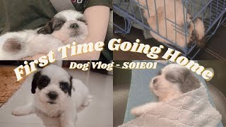 Dog Vlog  First Time Going Home  * Shih Tzu  Maltese (S01E01)