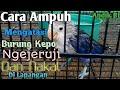 Cara Mangatasi Burung Kepo Di Lapangan  Mp3 - Mp4 Download