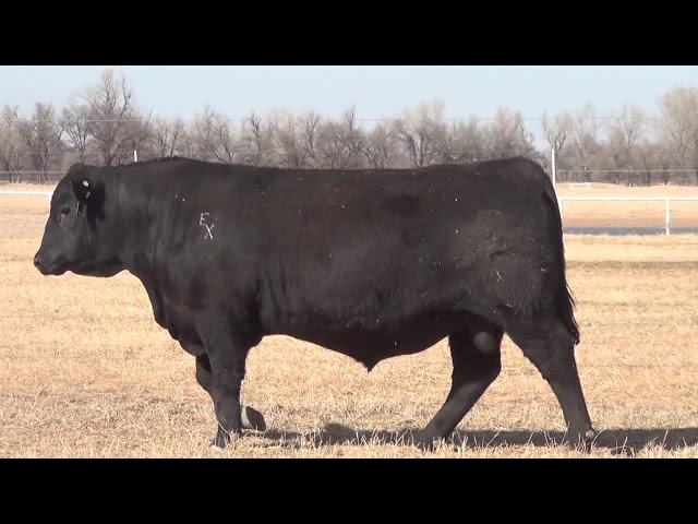 Express Ranches Lot 44