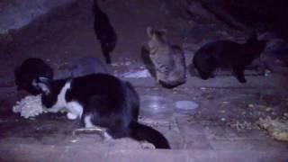 котята едят макароны