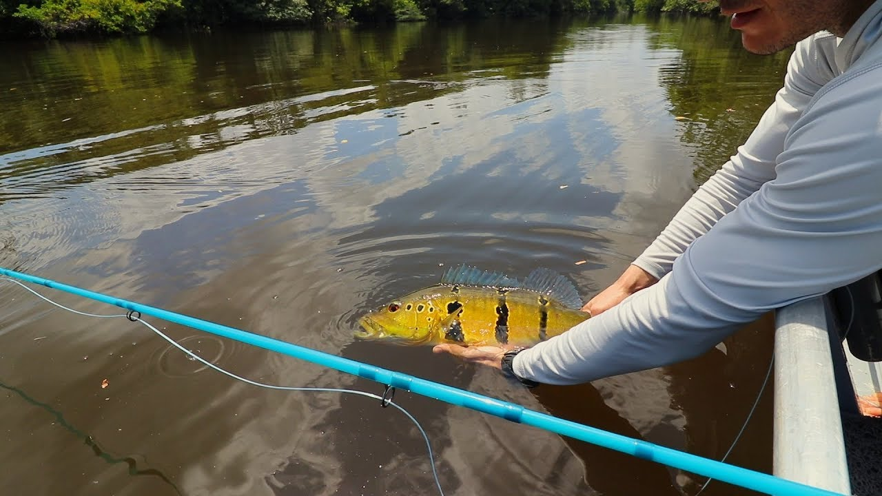 A LENDA DO ABACAXIS - Fly Fishing no rio Abacaxis, AM