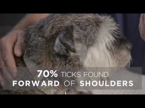 How To Remove A Tick With DR. Rob Webster | Bravecto AU