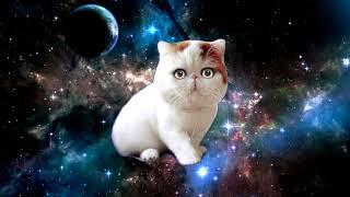 Поющая космическая кошка айм блю ¦ Space cat sing a song eiffel 65 blue as Magic Fly