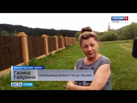 «Жук бы столько не съел»: в Алтайском крае под видом борьбы с насекомыми вырубают тайгу