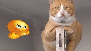 Funny Cat Videos Compilation Try Not To Laugh - Funny animals Videos