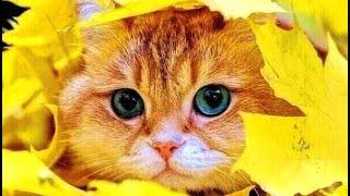 Смешное про животных Приколы с котами Видео про котов Кошки Позитив