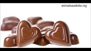 35 chocolate, beautiful photos & designs, Schokolade, entwirft schöne Foto, diseña hermosa foto,