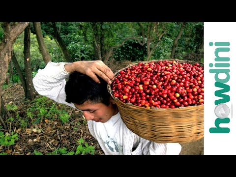 Fair Trade Original Coffee Guatemala from YouTube · High Definition · Duration:  6 minutes 38 seconds  · 778 views · uploaded on 7-6-2013 · uploaded by MattmoFilms