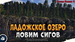 Сиги на Ладожском озере Driler Русская Рыбалка 4