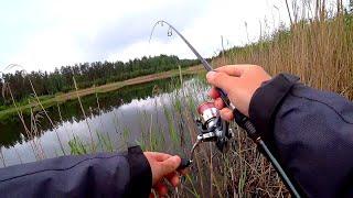 Безотказная рыбалка летом Как клюёт окунь когда водоём полон головастиков Сто поклёвок за утро