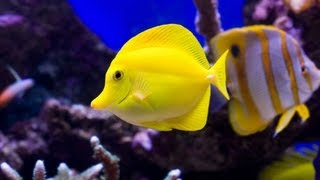 How to: Add Fish to Your Aquarium -  Drip Acclimation