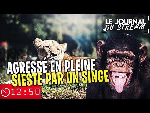AGRESSÉ EN PLEINE SIESTE PAR UN SINGE - Le Journal du Stream #24.1