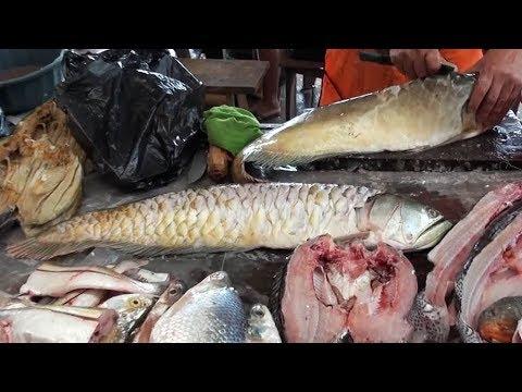 Amazon's Most Prized Fish (Vlog 7)