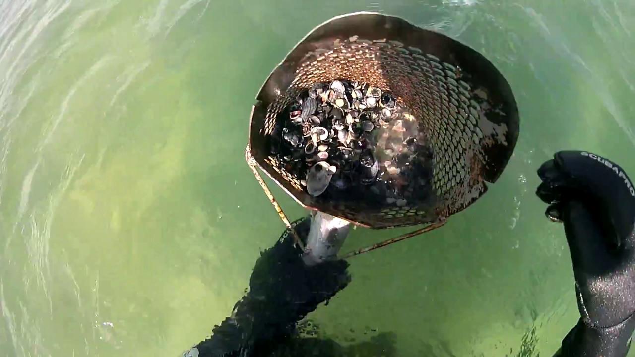 находки в азовском море фото тщательно следим достоверностью
