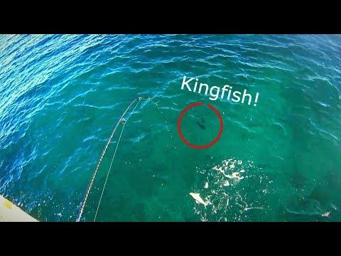 Tumby Bay Fishing Chaos (KINGFISH SIGHTING) & Kingscote Jetty Squid Galore!