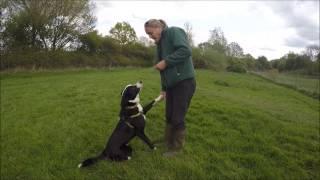 Dogs Trust Newbury: Ollie