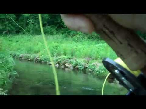 Fly fishing on a Wisconsin spring creek in the Driftless Area-Brook Trout