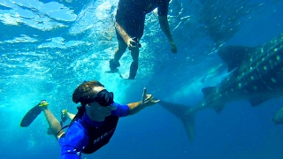 Tofo Beach, Unknown Paradise | Whale Sharks, Dolphins, Rays