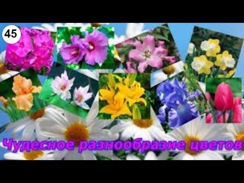Чудесное разнообразие цветов  #цветы #живые #красивые #букеты #прекрасные #волшебные