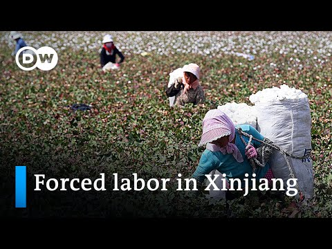 Xinjiang: New reports on detention and forced labor of China's ethnic minorities   DW News