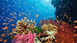Die Karibik - Die Rückkehr der Blumentiere Doku Natur 2017 | NEU | HD