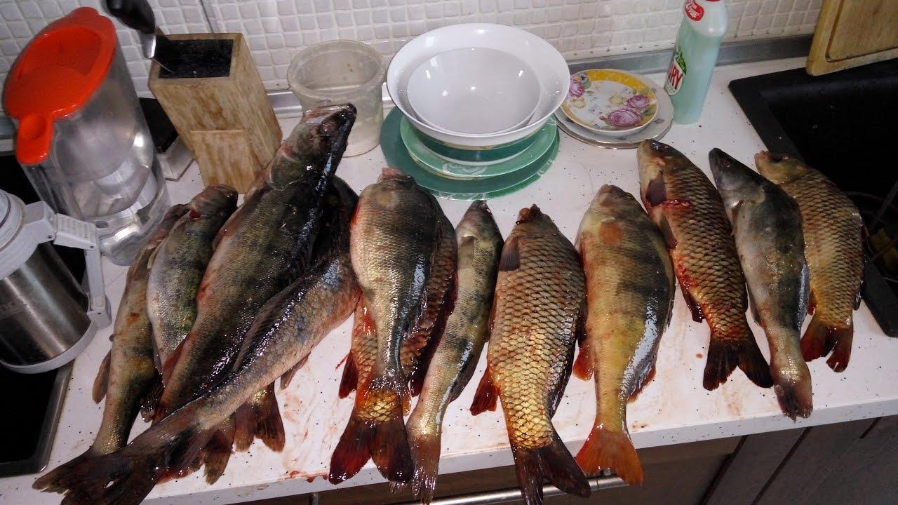 Рыбалка на реке подпольная ростовская область