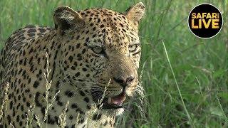 safariLIVE - Sunset Safari - February 22nd 2019