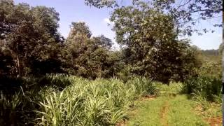 4 5 Acres land for sale in Tigoni Kenya