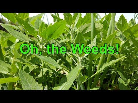 Organic Gardening 7:  Passive Gardening — Oh, the Weeds!