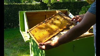 A bee swarm two years later